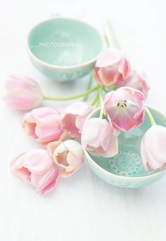 pink tulips | Flickr - Photo Sharing!