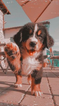 dogs and puppies ; dogs and puppies for sale ; dogs that dont shed ; Cute Dog Wallpaper, Animal Wallpaper, Puppies Wallpaper, Dog Wallpaper Iphone, Cute Little Animals, Cute Funny Animals, Funny Dogs, Cute Dogs And Puppies, Doggies