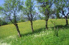 Trees near Lake Wolfgang, border Salzburg/Upper Austria