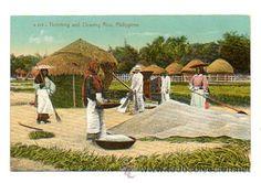 PHILIPPINES. FILIPINAS. MANILA. TRILLANDO Y LIMPIANDO EL ARROZ. (Postales - Postales Extranjero - Asia - Filipinas)