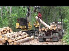 Cận cảnh quá trình khai thác gỗ công nghiệp ở Đức | Máy khai thác gỗ