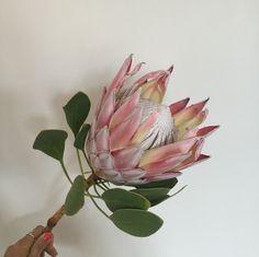 Flowery erbjuder blommor i prenumeration med hemleverans. #protea