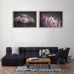 Botanical wall art prints for home or office decor. Botanical Wall Art, Botanical Prints, Art Prints For Home, Wall Art Prints, Protea Art, Large Format Printing, Custom Wallpaper, Flower Photos, Fine Art Paper
