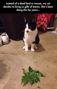 I would much rather receive thank you gifts of leaves instead of a mouse. Thank you cat. You are progressive.
