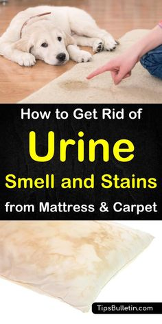 How to Get Rid of Urine Smell and Stains from Mattress and Carpet · Clean HouseUrine ...
