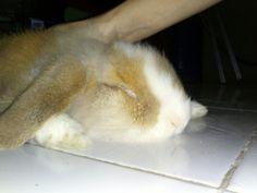 rub rub rub, too cute!