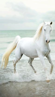 WHITE, gorgeous, horse, hest, White beauty, beautiful, gorgeous, stunning, Ocean view, clouds, beach, animal, photo.