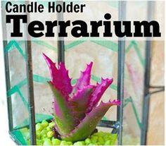 Converted Candle Holder Terrarium