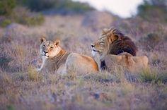 Voyage Afrique du Sud - © PeterBetts / Fotolia.com