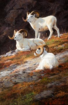 The Coeur d'Alene Art Auction ; KEN CARLSON (b. 1937) Rocky Heights – Dall Rams (2014) oil on board 30 × 20 inches signed lower right Sold at Auction: $35,100