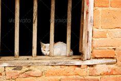 Kitten  #photodune