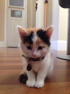"""** """"De difference 'tween me and a felted toy kitten be dat me kin breathe and LUV."""""""