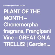PLANT OF THE MONTH – Chonemorpha fragrans, Frangipani Vine – GREAT ON A TRELLIS! | Garden Expressions | Landscape Design for Residential, Commercial and Pools - Coffs Harbour Landscape Design, Garden Design, Garden Care, Trellis, Vines, Pools, Commercial, Plants, Gardens