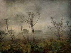 Early Fog by Sarah Jarrett, via Flickr