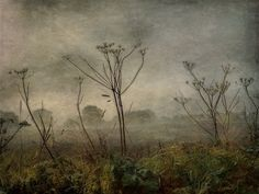 Early Fog by Sarah Jarrett, via Flickr