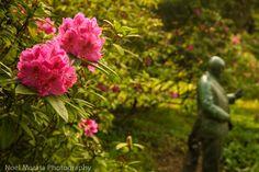 Friday Photo - Golden Gate Park Blooms