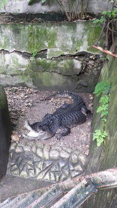 Zoo Visit Wildlife