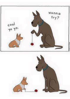 Corgis and yo-yos don't generally go hand in hand