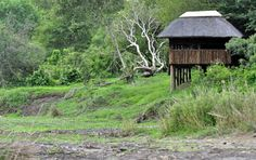 Sweni Hide near Satara in Kruger Park.fun to sit in the hide and watch… Places Ive Been, Places To Go, Like A Lion, Kruger National Park, Baboon, Sounds Like, South Africa, Safari, Creepy