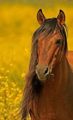 Mustang Stallion, horses scare me to death but they are beautiful creatures. Clydesdale, Most Beautiful Animals, Beautiful Horses, Beautiful Creatures, Horse Pictures, Animal Pictures, Animals And Pets, Cute Animals, Majestic Horse