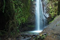 The jungles of Belize are a wonderland of waterfalls and rainbows, of lush plants and flowers. San Igancio is a great place to start your jungle adventure! Great Places, Places To See, Off The Map, Pictures Of You, Belize, Ecology, Mother Earth, Wilderness, Lush