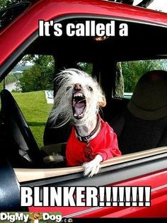 This is how I feel almost every time I drive!!!!