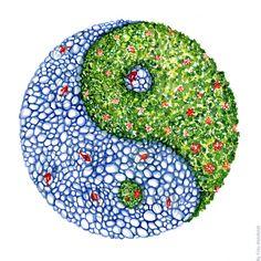 Water and green plants watercolor sketch Arte Yin Yang, Ying Y Yang, Yin Yang Art, Feng Shui, Watercolor Plants, Watercolor Sketch, Foto Logo, Interior Design Classes, Studio Interior