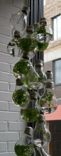 Hanging water garden using light bulbs. Maybe I should start with air plants or mini terrariums. Indoor Garden, Indoor Plants, Outdoor Gardens, Hanging Plants, Garden Ponds, Herb Garden, Decoration Plante, Diy Decoration, Garden Bulbs