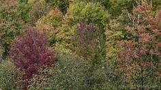 https://flic.kr/p/zbVPMo   Palette de couleurs d'automne   Images taken by hoan luong is licensed under a Creative Commons Attribution-NonCommercial-NoDerivs 3.0 Unported License.