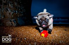 Pet Photography Tips: Getting the Perfect Picture of your Pooch