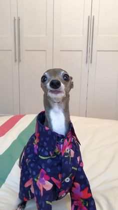 Crazy Funny Videos, Funny Animal Videos, Funny Animal Pictures, Cute Funny Dogs, Cute Funny Animals, Funny Dog Pics, Funny Animal Jokes, Animal Memes, Funny Outfits