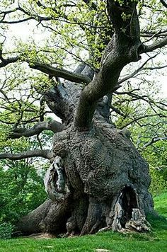 Crooked with massive irregular growth this tree has seen adversity and triumphed over and over again.