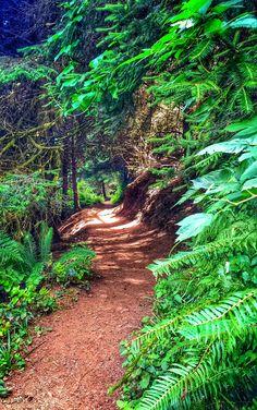 Ecola State Park Trail, Oregon