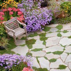 Flagstone patio with Irish Moss
