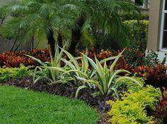 Colorful Tropical Florida Landscape