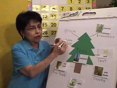 1st Grade Science - Pine Tree Unit Lesson 2 of 5