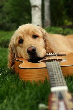 Music Time, Doggie style..