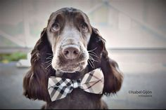 Plaid Burly wood bow tie Dog Bow Tie attached to by LADogStore