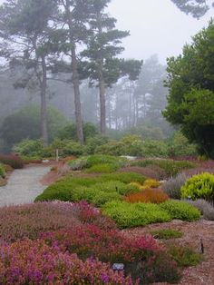 Heaths & Heathers - Oh so beautiful, but don't do well in my zone. But the color and planting schemes could be mimicked with drought-tolerant plants.