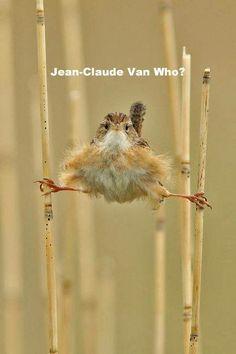 The epic split- Jean Claude Van who???