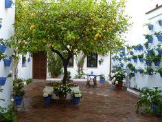 レモンの鉢植え - Google 検索