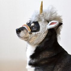 Fuente: http://www.ravelry.com/projects/roko/unicorn---> I'm going to make one of these for my dog!