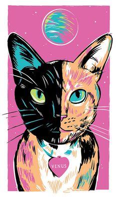 Venus the Two-Faced Chimera Cat, A Sketch by Josh Ellingson