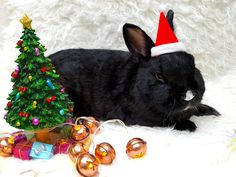QUIZ: How Does Your Pet Rabbit Want to Celebrate the Holidays? https://www.petful.com/buzz/rabbit-quiz/