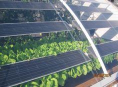 solar aquaponics, mixing teck with growth!