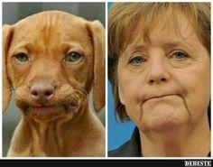 Sind sicher Zwillinge. :) | Lustige Bilder, Sprüche, Witze, echt lustig