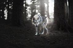 Hunter by Alicja Zmysłowska on 500px