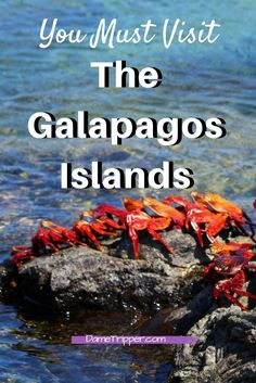 The Galapagos Islands are EXPLODING with diverse beauty and nature. You will not regret visiting this outstanding place off the coast of Ecuador. Read through for details and inspiration on visiting one of the most unique places on earth!