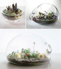 i love terrariums!
