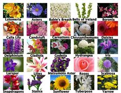 7 Best Seasonal Flowers By Month Images Seasonal Flowers Wedding